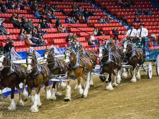 Planning Suspended For 2021 Royal Manitoba Winter Fair